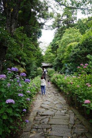 Honkoji Temple: photo3.jpg