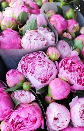 Auteuil, France : Fleurs du jardin