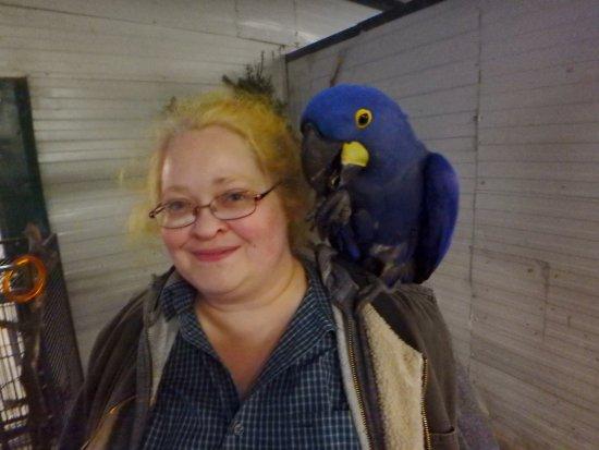 World Parrot Refuge: BUTTON THIEF!! Not sorry at all!