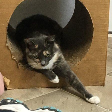Blind Cat Rescue Amp Sanctuary Saint Pauls 2020 All You