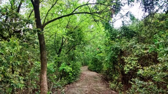 Bethuadahari Wildlife Sanctuary: Winding paths surrounded by green.