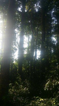 Ngezi Forest Reserve