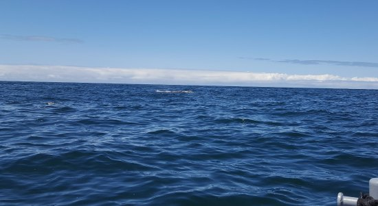 Depoe Bay, OR: Photo on resident whale.