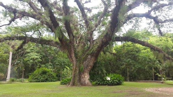 Naguanagua, เวเนซุเอลา: Jardín Botaníco
