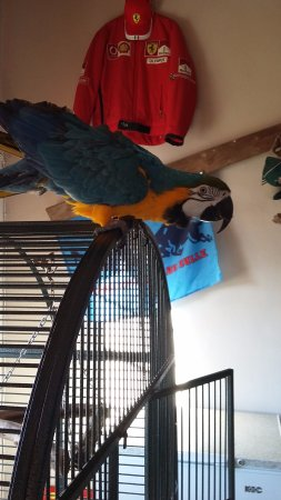 the start of the macaw's nervous breakdown
