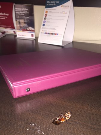 Comfort Suites Morrow : huge roach dead on desk