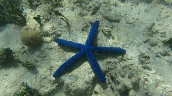 Green Island, Australië: Sea Star