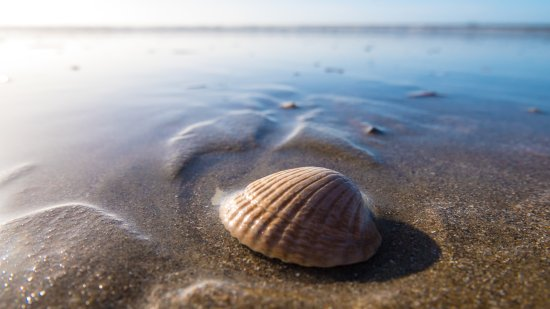 Sand Dollar Shelling: The best beaches in SWFL.