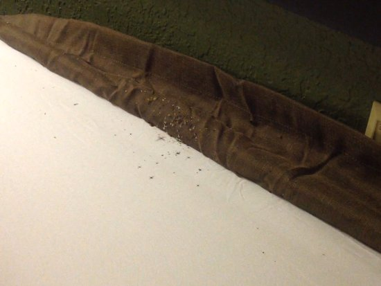 Amherst, NY: Bedbugs, bedbug exoskeletons, bedbug droppings and blood residue at headboard when I moved mattr