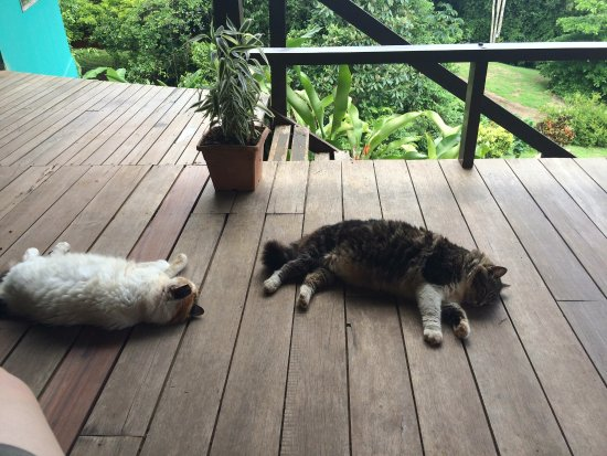 Finca Maresia: Vista exterior desde la zona común, del interior de una de las cabañas y de los gatos dormitando