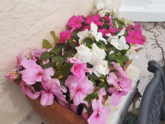 Sunnyside Guest House: flowers