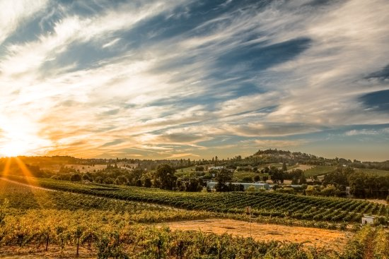 Plymouth, CA: Renwood Estate Vineyard