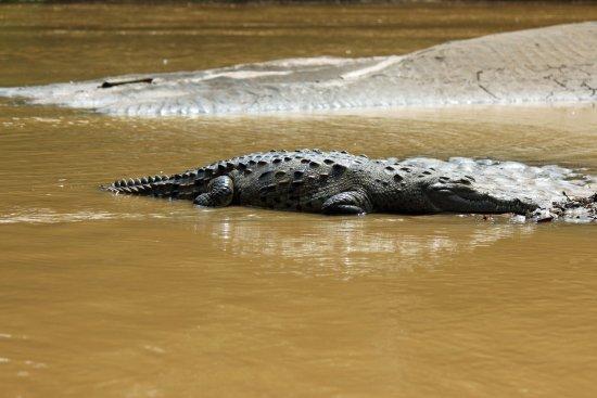 Canoa Aventura: Safari Float