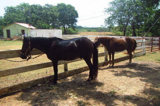 Red Ridge Stables: the horses