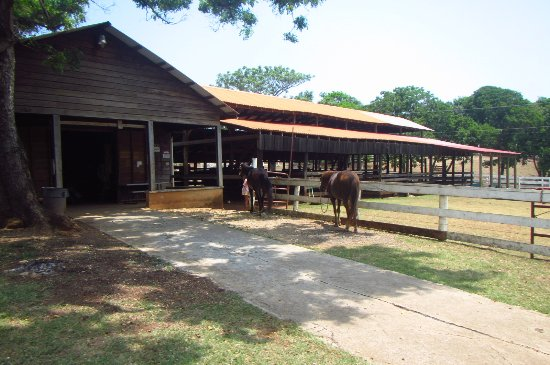 Red Ridge Stables: the stables