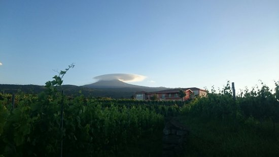 Linguaglossa, อิตาลี: contrada #Martinella in #Vivera #Etna #winery 