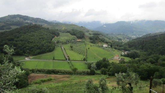 Mastiano Photo