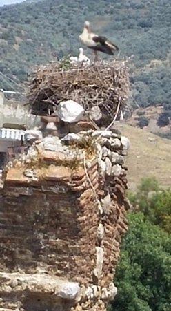 Hotel Nazar: Baby storks on corner