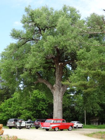 Wautoma, WI: Gorgeous Old Tree shades the Parking Lot!