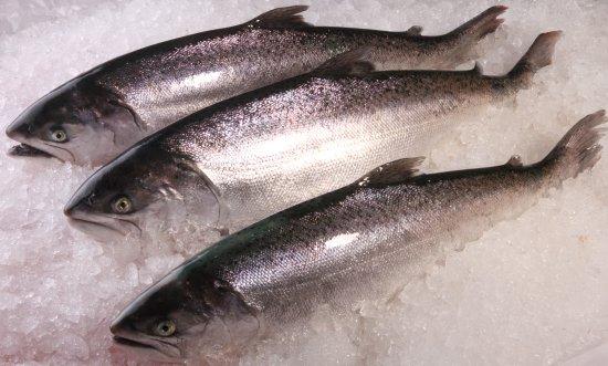 Twizel, New Zealand: Fresh Salmon