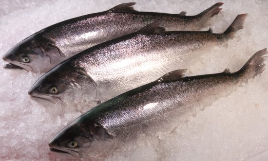 Twizel, Νέα Ζηλανδία: Fresh Salmon