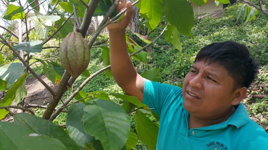 Punta Gorda, Belice: Feliciano Pop with Cacoa bean