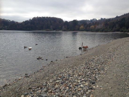 Cabanas Borgolafquen: Patos en el lago