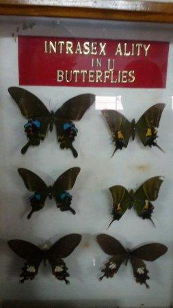 Butterfly Museum: 20160613_114843_large.jpg