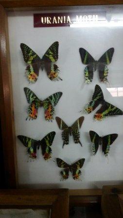 Butterfly Museum: 20160613_114853_large.jpg