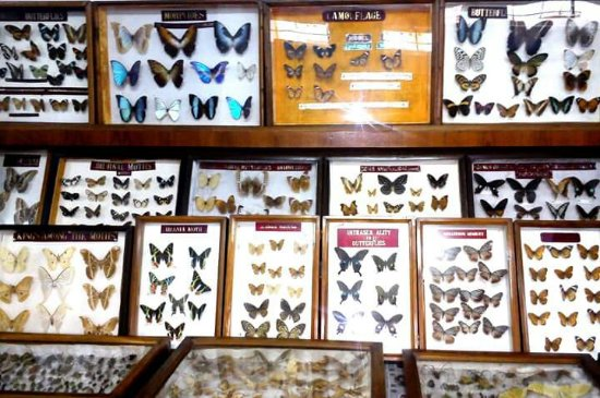 Butterfly Museum: FB_IMG_1465825865725_large.jpg