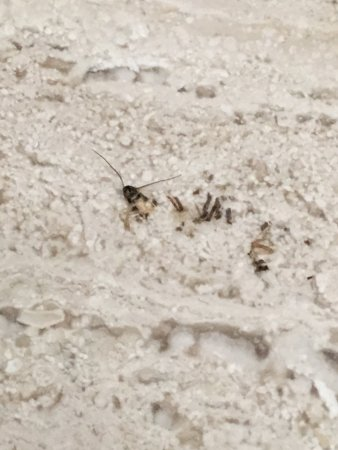 Hotel Imperial Reforma: Nasty roaches