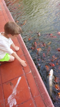 Melia Puerto Vallarta All Inclusive: feeding the fish