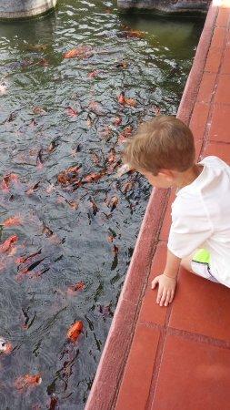 Melia Puerto Vallarta All Inclusive: lots of Koi ponds