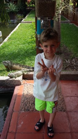 Melia Puerto Vallarta All Inclusive: iguana in background near fish area, grandson