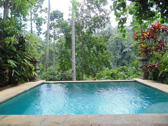 Anahata Villas & Spa Resort: Private plunge pool