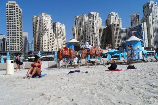 Hawthorn Suites by Wyndham, JBR Dubai : Пляж возле отеля