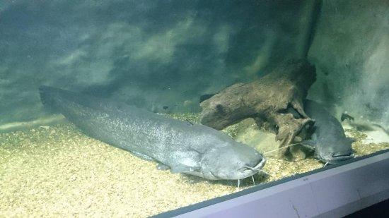 The Danube Delta Museum: Aquarium Tulcea