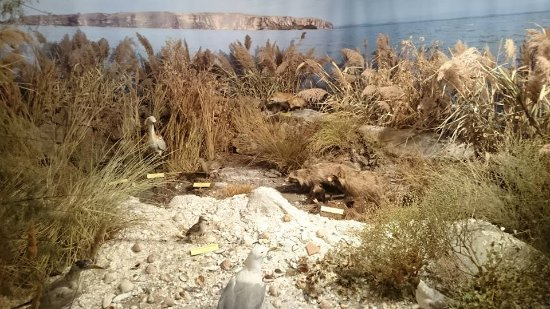 Tulcea Aquarium: fotograf?a de The Danube Delta Museum, Tulcea ...