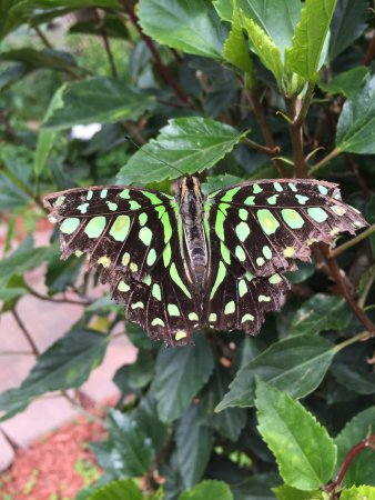 Original Mackinac Island Butterfly House And Insect World