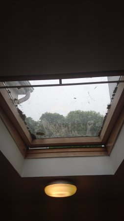 The Strand Inn: Velux window in common area covered in moss dirt cobwebs and insects