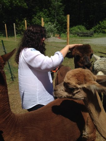 Vermont Alpaca Store & Living the Dream Alpaca Farm