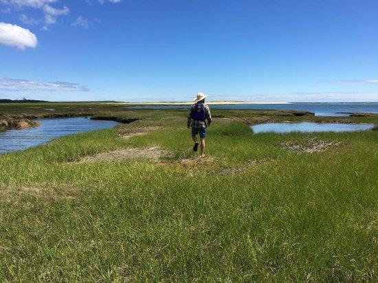 Great Marsh Kayak Tours: photo2.jpg