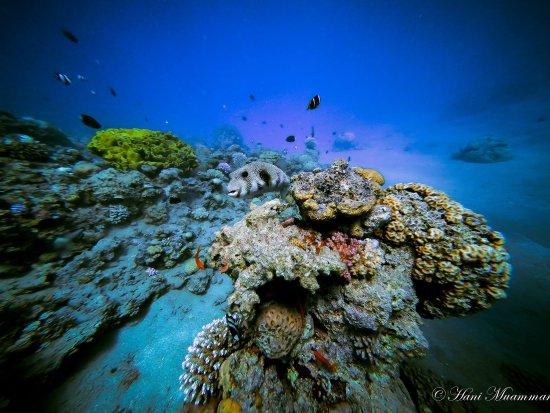 Foto de deep blue dive center aqaba deepblue dive center - Deep blue dive centre ...