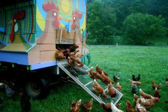 Orangeville, Πενσυλβάνια: Forks Farm