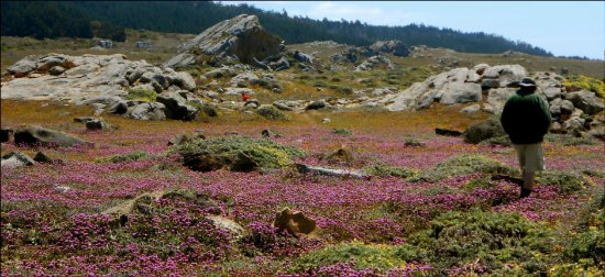 The Sea Ranch, CA: Exceptional wildflower seasons that will stun you!