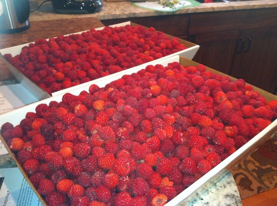 Urbana, OH: Red raspberries