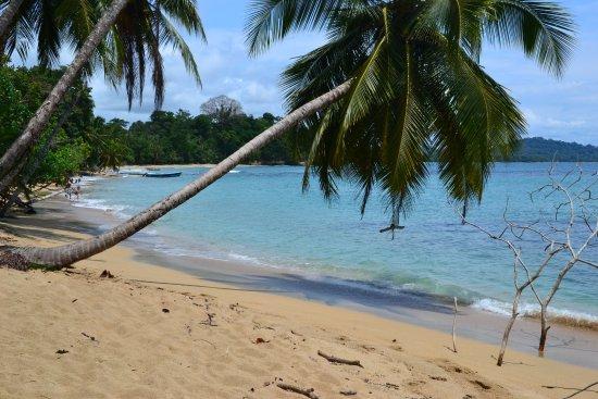 Punta Uva, Costa Rica: Arena dorada, palmeras, vegetación, agua de playa clarita y tibia.
