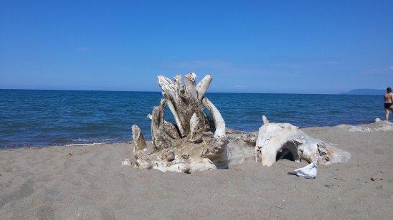 """Cieloverde Camping Village: Spiaggia """"cimitero degli elefanti"""""""