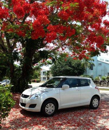 Bodden Town, Wielki Kajman: Rental Car