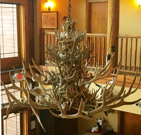 The big antler chandelier over the dining room picture of lodge lodge at grants trail by orlandos the big antler chandelier over the dining aloadofball Choice Image